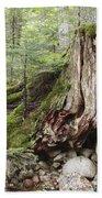 Decaying Tree Stump Beach Sheet