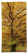 Deciduous Forest In The Autumn Beach Towel