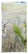 Deer 005 Beach Towel