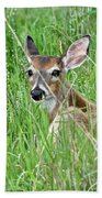 Deer Bedded Down During Mid Day Beach Towel