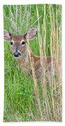 Deer Bedded Down In Grass Beach Towel