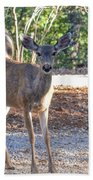 Deer Doe - 1 Beach Towel
