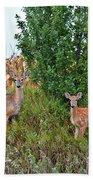 Deer Family Beach Towel