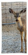 Deer Fawn - 1 Beach Towel
