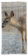 Deer Fawn - 2 Beach Towel