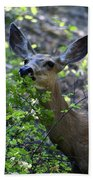 Deer Having Lunch Beach Towel