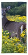 Deer In A Field Of Yellow Flowers Beach Towel