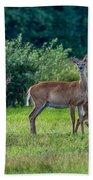 Deer In A Hay Field Beach Towel