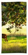 Deer In Autumn Meadow - Digital Painting Beach Towel