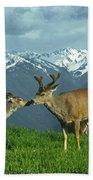 Ma-181-deer In Love  Beach Towel