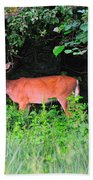 Deer In Overhang Of Trees Beach Towel