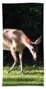 Deer In Shadows Beach Towel