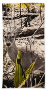 Deer In The Wood Beach Towel