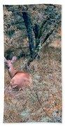 Deer In Woods Beach Towel