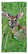 Deer Laying In Grass Beach Towel