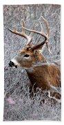 Deer On A Frosty Morning  Beach Sheet