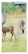 Deer18 Beach Towel