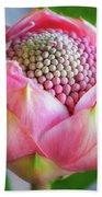 Delicate Pink Bud Waratah Flower Beach Sheet