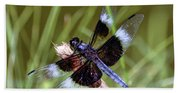 Delicate Wings Of A Dragonfly Beach Towel