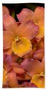 Dendrobium Oriental Smile Beach Towel
