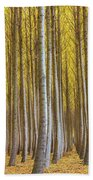 Dense Forest Of Poplar Trees In Boardman Oregon During Fall Beach Towel