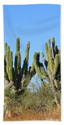 Desert Cacti In Cabo Pulmo Mexico Beach Towel