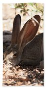 Desert Jackrabbit Beach Towel