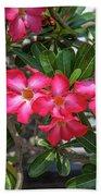 Desert Rose Or Chuanchom Dthb2107 Beach Towel