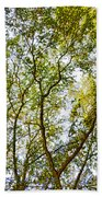 Detailed Tree Branches 5 Beach Towel