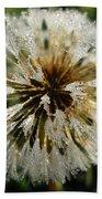 Dew Covered Dandelion Beach Towel