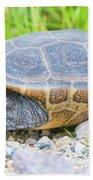 Diamondback Terrapin Beach Towel