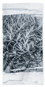 Dianthus Barbatus Bw Beach Towel