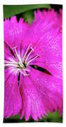 Dianthus First Love Flower Print Beach Towel