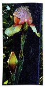 Digital Painting Pink And Yellow Iris 6758 Dp_2 Beach Towel