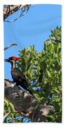 Ding Darling - Pileated Woodpecker Resting Beach Towel