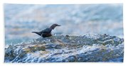 Dipper Searching For Food Beach Towel