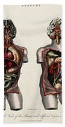 Dissected Torsos And Brains Beach Towel