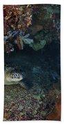 Diver And Sea Turtle, Manado, North Beach Towel by Mathieu Meur