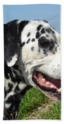 Dodgy The Dalmation Beach Towel
