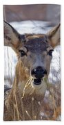 Doe Beach Towel
