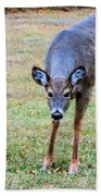 Doe Stomp Beach Towel