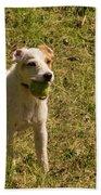 Dog And A Ball Beach Towel