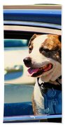 Dog In Car Beach Towel