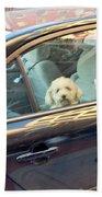 Dog On The Move Beach Towel
