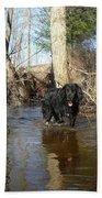 Dog Wading In Swollen River Beach Towel