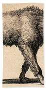 Dog With Rabies, Engraving, 1800 Beach Towel