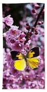 Dogface Butterfly In Plum Tree Beach Towel