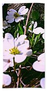Dogwood Blossoms Pair Up Beach Towel