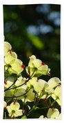 Dogwood Flowers White Dogwood Tree Flowers Art Prints Cards Baslee Troutman Beach Towel