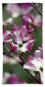 Dogwood Tree Beach Towel